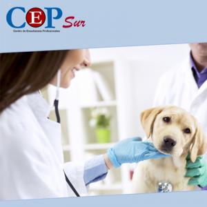 estudiar-auxiliar-veterinaria-tenerife